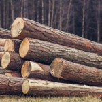Dief neemt acht hectare bos mee