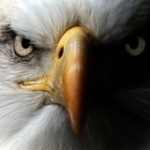 Nederlandse roofvogel beveiligt NAVO-top