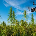 Boeren mogen met drones zoeken naar wiet