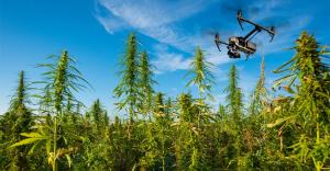 Limburgse boeren mogen drones inzetten om wiet op te sporen